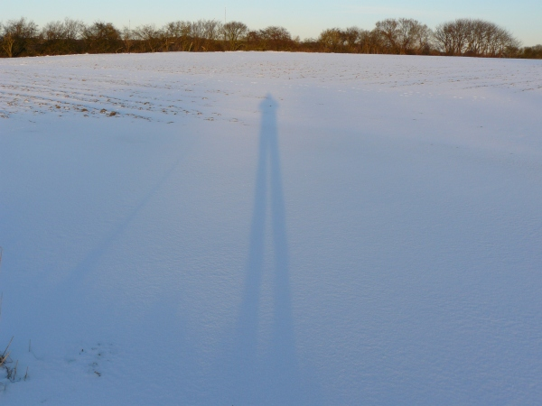 Long winter shadows