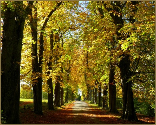 Vilhelmsborg Allé - in autumn sunshine