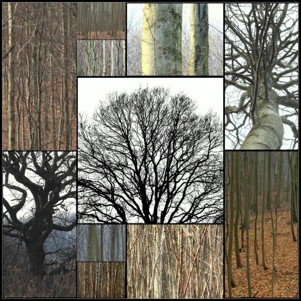 Marselisborg skov til collage-001