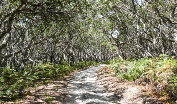 eucalyptus px