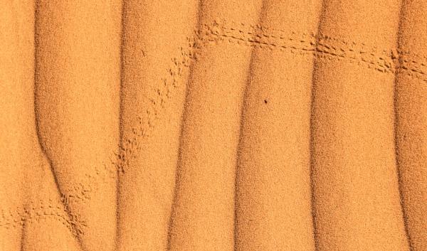 Desert fascination #7 - Indecisive