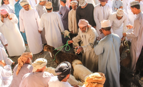 Goat traders 5