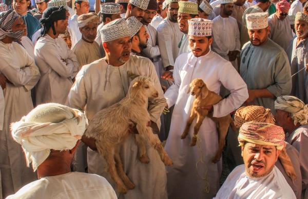 Goat Trades 2 px